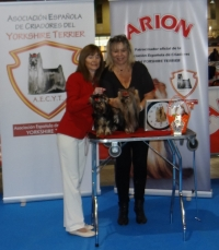 MINATERRA: YORKSHIRE TERRIER SPECIALITY SHOW AECYT MALAGA 2015.